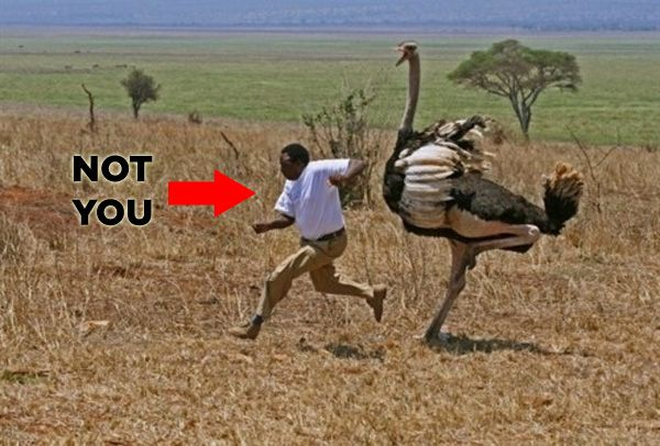 Be happy this isn't you!! Hilarious stuff via http://www.buzzfeed.com/mjs538/13-simple-steps-to-get-you-through-a-rough-dayLaugh, Real Life, Funny Pictures, Birds Africa, Funny Stuff, Africa Style, African Style, Angry Birds, Angrybirds