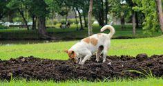 Se seu cachorro é hiperativo então temos algumas dicas para o conseguir acalmar! #animais #pets #cachorro #cães