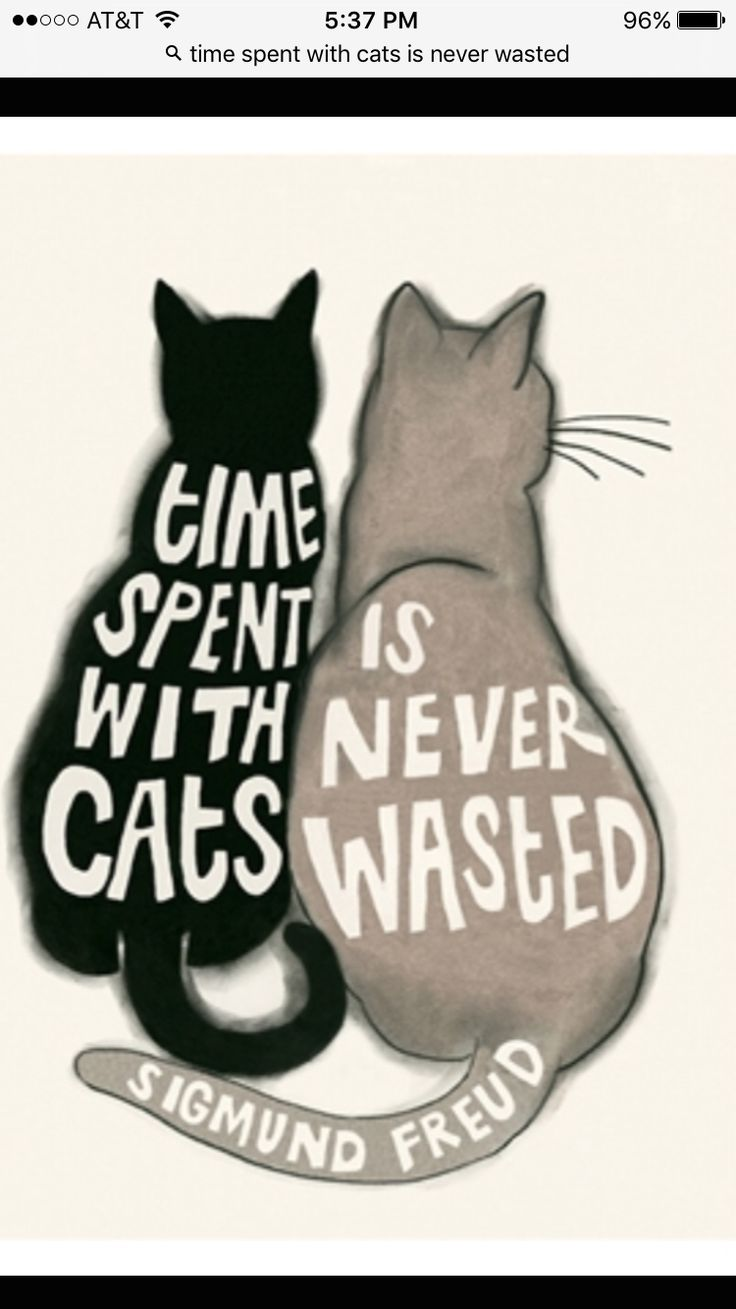 This is so true and I will forever love my cats Stormy and Tobey