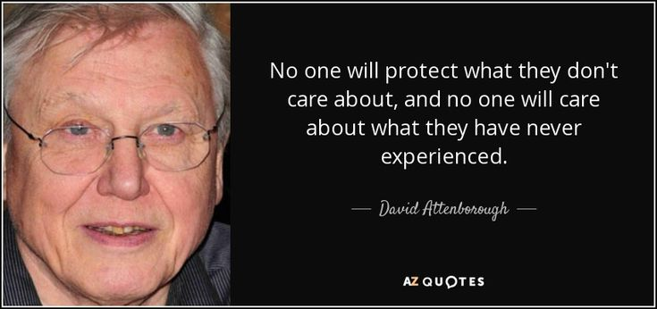 TOP 25 QUOTES BY DAVID ATTENBOROUGH (of 143) | A-Z Quotes