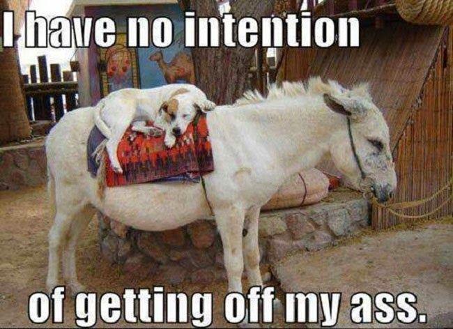 Funny Dog Ass Pun Joke Meme Picture