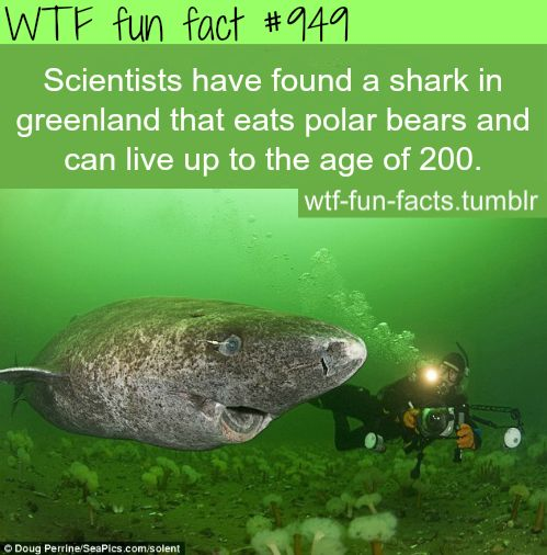 shark in *Greenland. MORE OF WTF-FUN-FACTS are coming HERE funny and weird facts ONLY