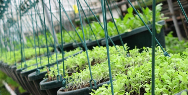 Sustainable Agriculture Research and Education (SARE). Great resource