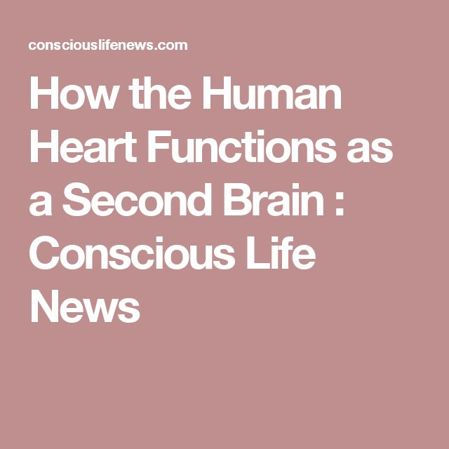 How the Human Heart Functions as a Second Brain : Conscious Life News