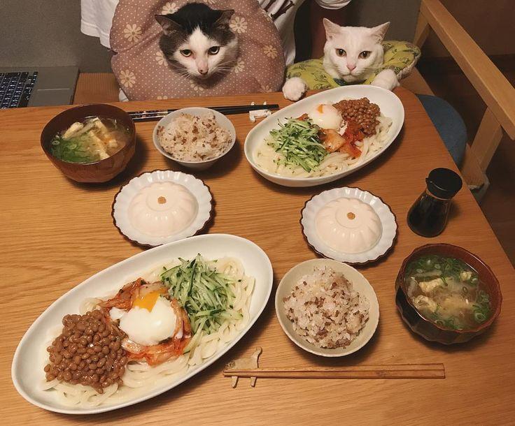 昨日の夜ご飯☆ 一緒に買い物に行ってお父はんが選んだ納豆とキムチで、冷やし納豆キムチうどん♩ お父はんが選んだお豆腐もトロリと柔らかくて美味しかった♩ 昨日の、気づいたらフォロワーさんが13万人になっていたんです写真に、たくさんのイイね❤︎&コメントありがとうございまススースー✨ #八おこめ #ねこ部 #cat #ねこ #八おこめ食べ物 #納豆キムチうどん