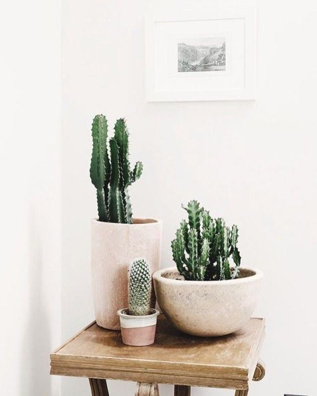 Mid Century Modern Pots With Indoor Cacti Credit Unknown