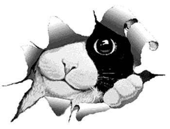 Sureflap Microchip Cat Flaps