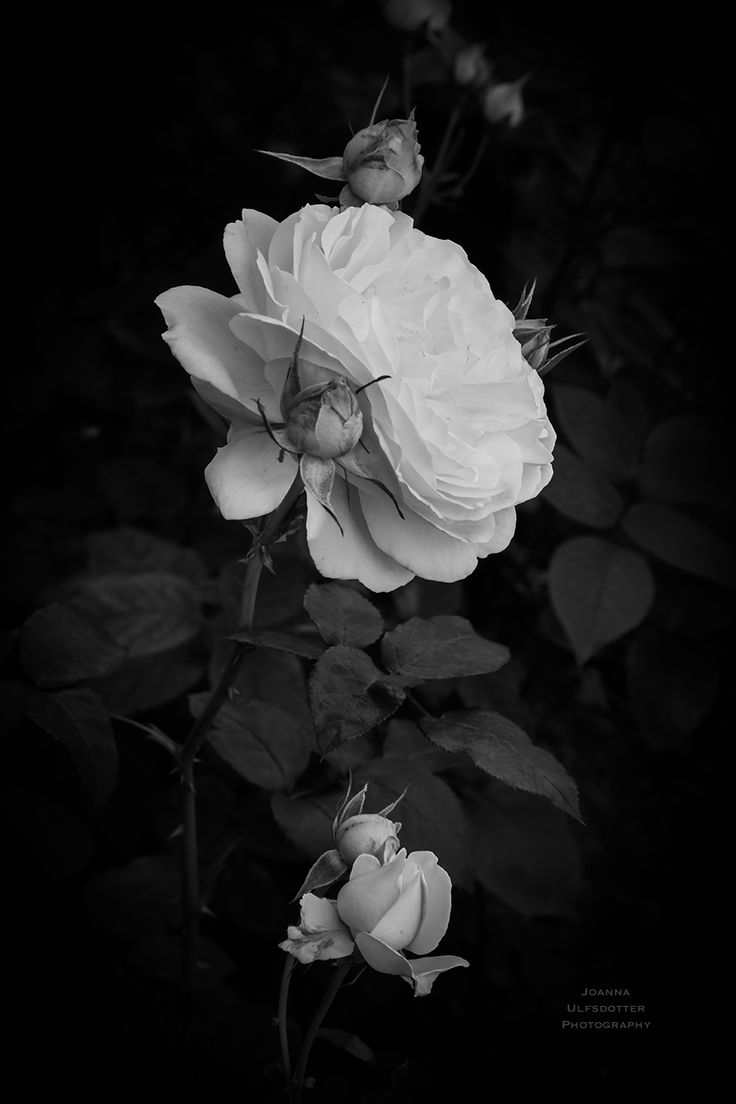 © Joanna Ulfsdotter Photography