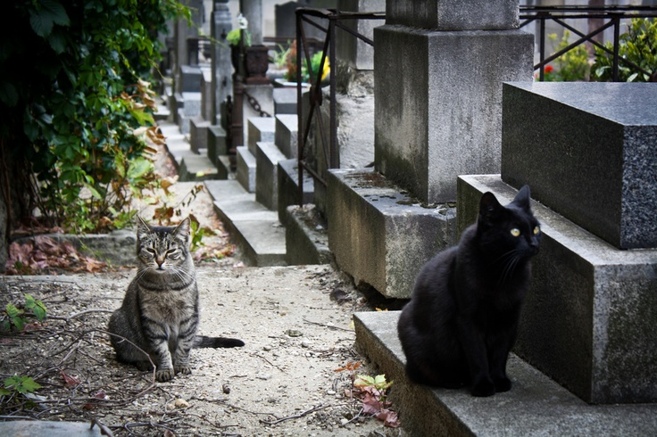 Two cats casually wonder around Monmartre Cemetery - Paris. --- Photo by Nelson Pereira
