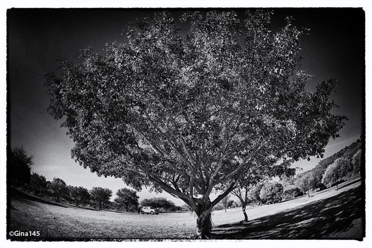 Fish-eye view of a tree