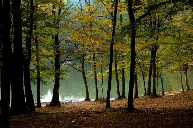 Green #Gargano by L▲iv ©, via Flickr
