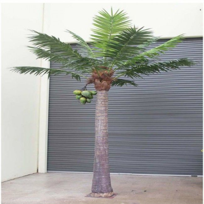 COCO PALM 3.8M ( SPECIAL ORDER )