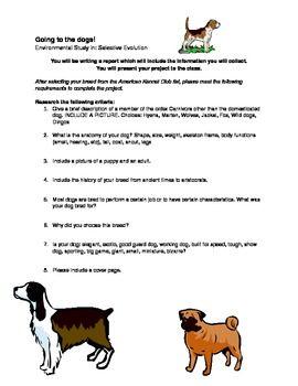 evolution worksheets high school biology evolution lesson plans high school biology geneed ge. Black Bedroom Furniture Sets. Home Design Ideas