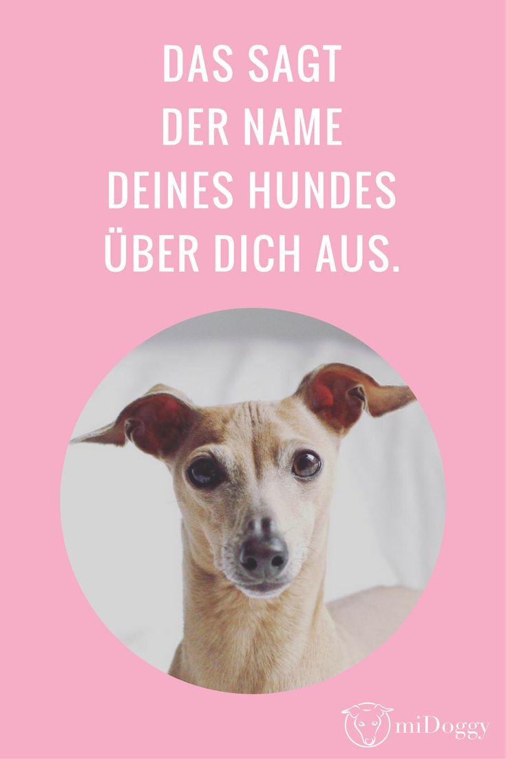 Was sagt der Name Deines Hundes über Dich aus? Das erfährst Du hier.