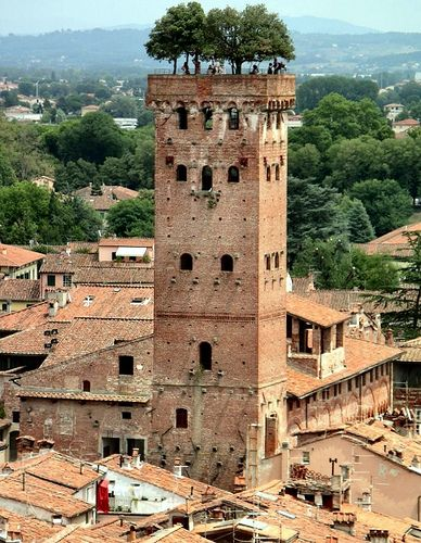 The Guinigi Tower with roof garden. Lucca, Italy