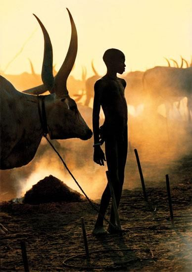 Dinka boy and his Ankole-Watusi cattle