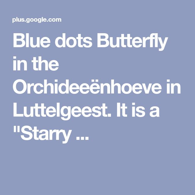 """Blue dots Butterfly in the Orchideeënhoeve in Luttelgeest. It is a """"Starry ..."""