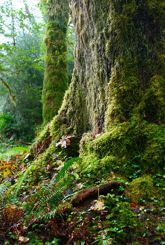 Mousses en forêt