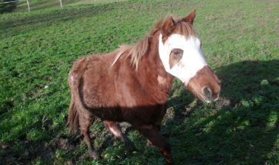 Etoile, Association cheval espoir 38, Clic Animaux
