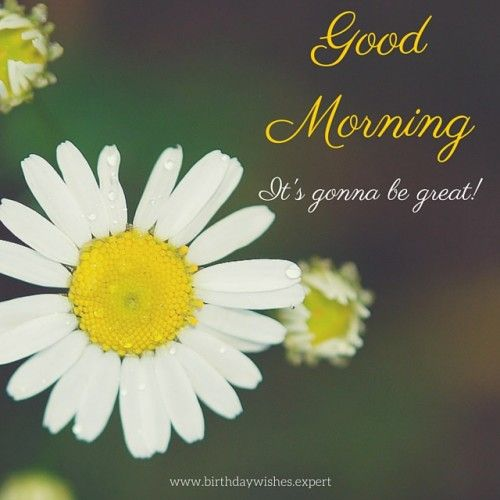 Good Morning Image with white daisies.