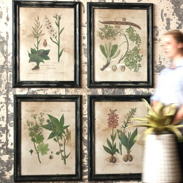 Framed Botanical Prints | Botanical Gardening Prints | Vintage Botanical Prints | Horticulture Prints