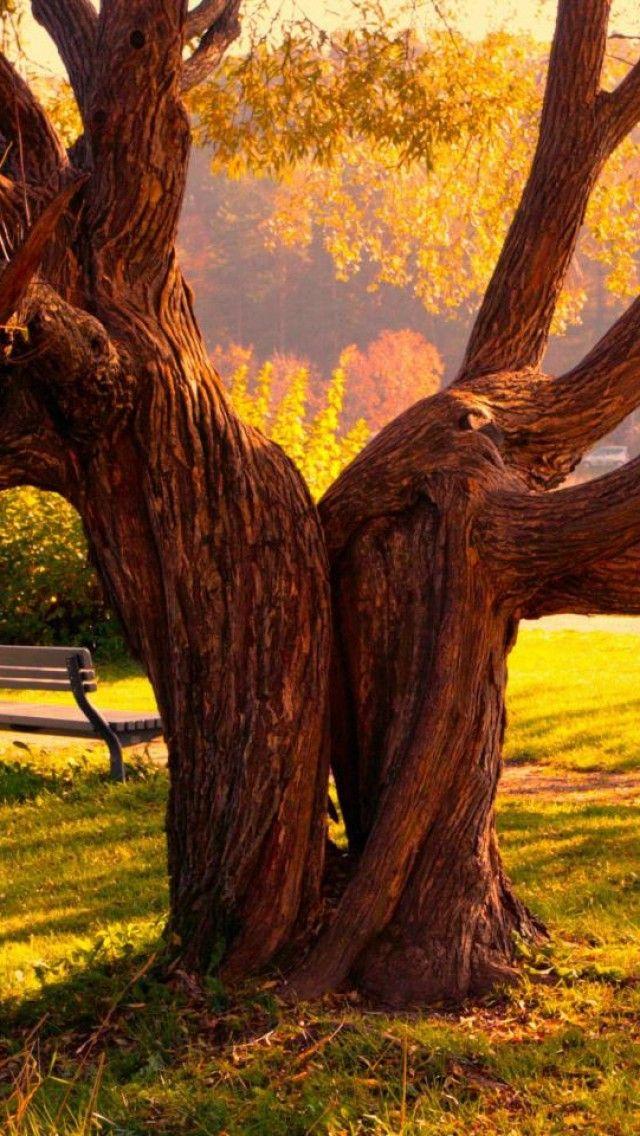 Landscape, Park, Tree, Yellow, Nature
