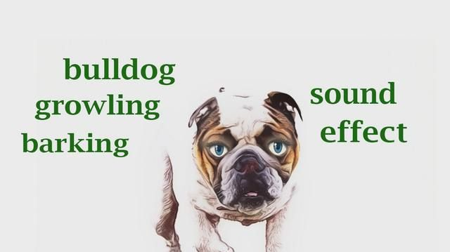 How A Bulldog Growling Barking Sound Effect Animation Bulldogvideo Forkids Http Buff Ly 2s7zsby Animal Life Cycles Animal Books Animated Animals