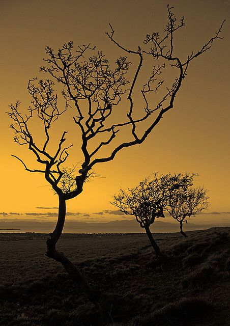 Trees | by Ian McClure
