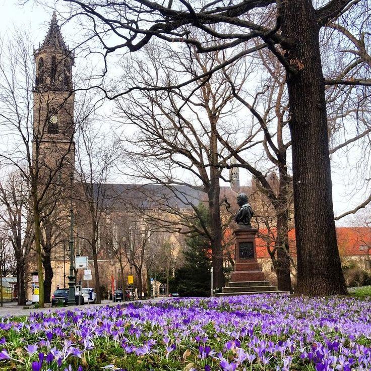 Nun wird es endlich Frühling. In der Hebelstraße in Magdeburg blühen die Krokusse.  Das Denkmal in der Mitte zeigt Friedrich Friesen und wurde ihm zu Ehren 1893 von Ernst Habs geschaffen.  #Magdeburg #Sachsenanhalt #Deutschland #Germany #visitgermany #instatravel #travelgram #igersdeutschland #igersgermany #ig_germany #ig_deutschland #igtravel #Heimat #bestgermanypics #diewocheaufinstagram #loves_united_germany #loves_europe #meinestadt #meindeutschland #srs_germany #travelblogger…