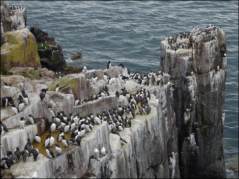 Farn Islands, Northumberland, England - Boat trip to the Farne Islands to see the guillemots, terns, puffins, gannets and grey seals.  Fabulous - can see why David Attenborough is a fan!