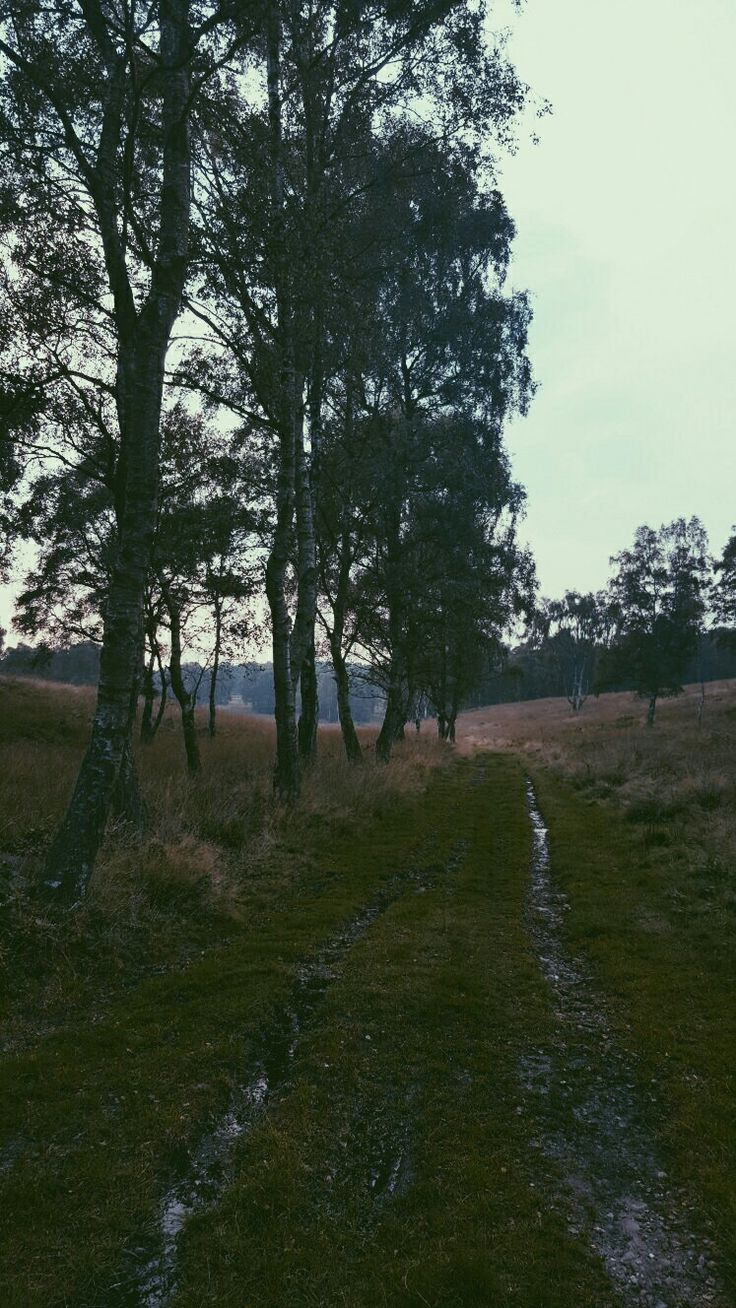 Evening in Cannock Chase. Edited using VSCO.