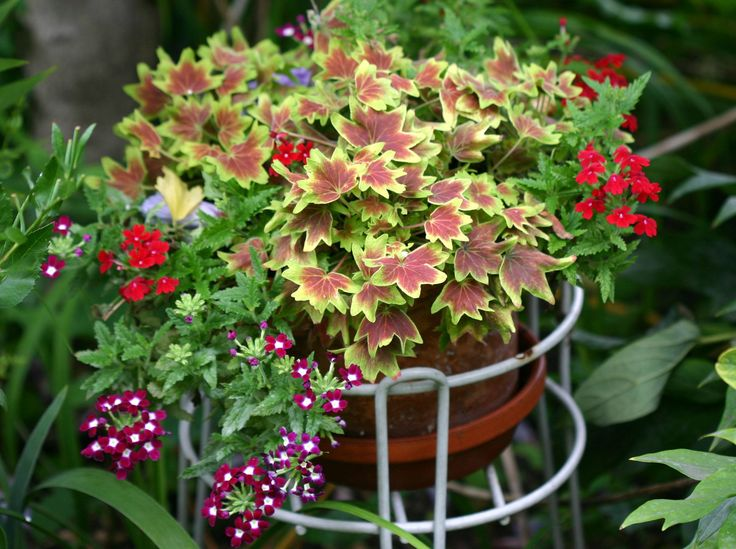 Flower pot arrangements flower pot arrangement lpcg for Garden arrangement of plants