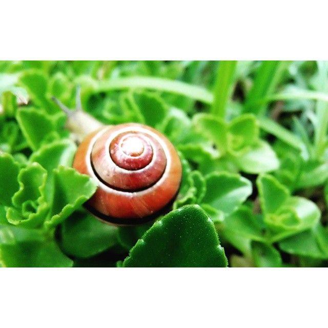 #slimak #slimak#pokaz #rogi#green#nature#garden#plant #poland#spring #may#weekend #photoshoot #instagood#snail#photography#macro@instanature_789