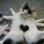 two cats - one heart