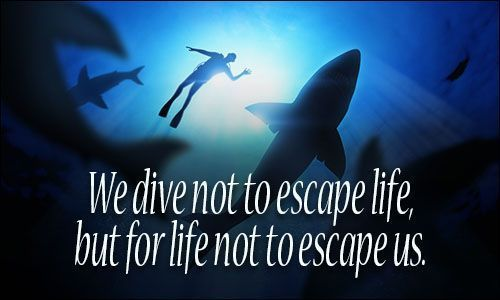 Image result for scuba diving quotes #scubadivingquoteshilarious #scubadivingquotesunderwater