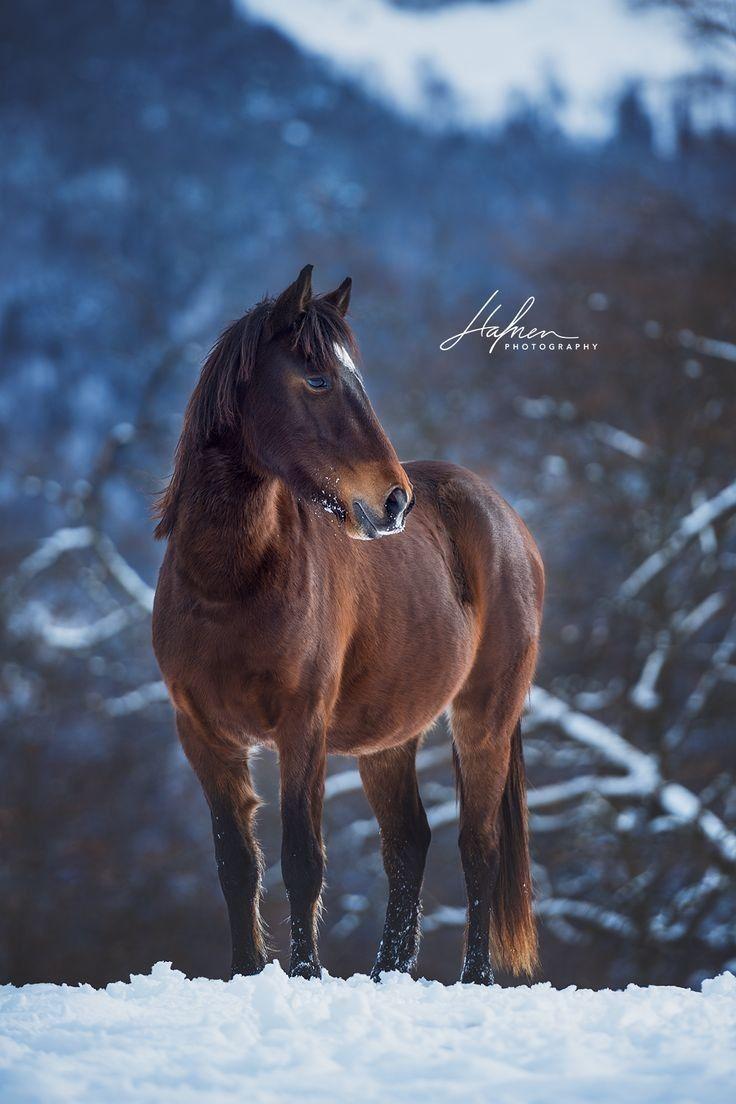 Epingle Par Ashley Shayne Sur Horses In The Snow En 2020 Fond Ecran Cheval Passion Cheval Cheval