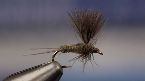 Evil Olive in Practical Patterns on Vimeo Fishing | Fishing