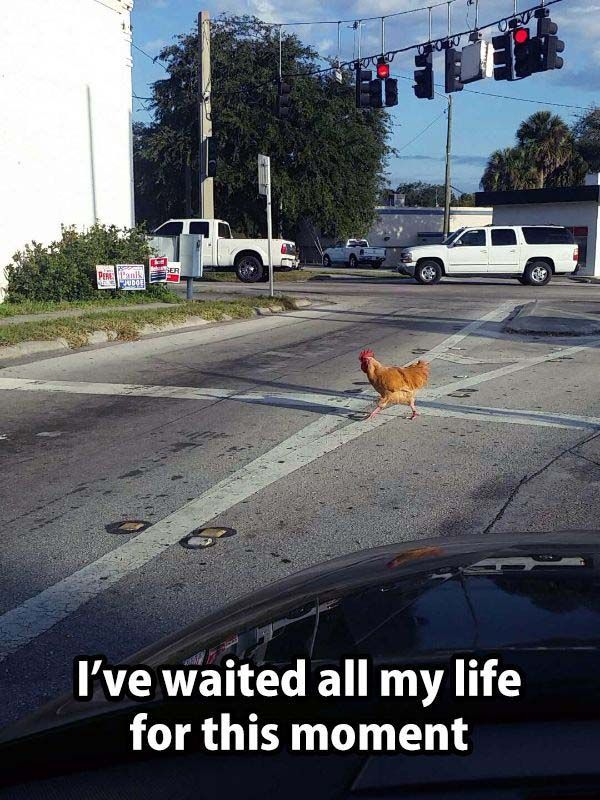 funny pictures and quotes new (159) #compartirvideos #funnypictures
