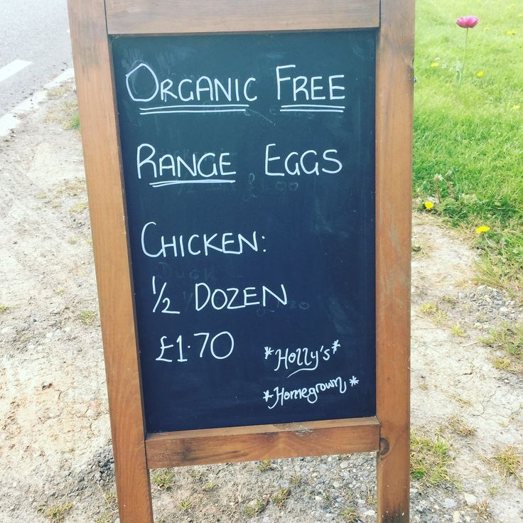 Holly's Homegrown is back in business #organicfreerangeeggs for sale #keepingchickens #freerangechickens