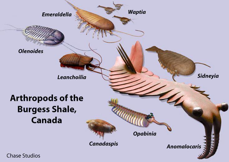 ピカイア、あらゆる生物の祖先!カンブリア爆発の謎!