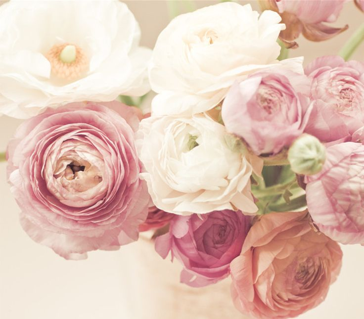 Looking for the best flowers in season in April? It's not an easy task to choose the one for you. Here is the list of 17 most beautiful April wedding flowers.