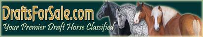 DraftsForSale.com: Gypsy Vanner Horse For Sale - Rinkenni Dutchess