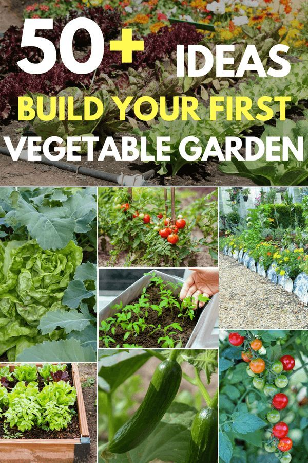 50+ Ideas To Build Your First Vegetable Garden The Beginner