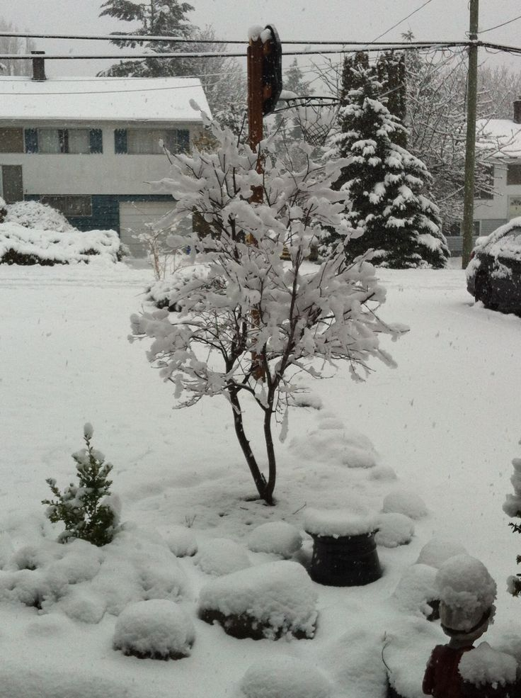 Comox, Canada Winter 2014