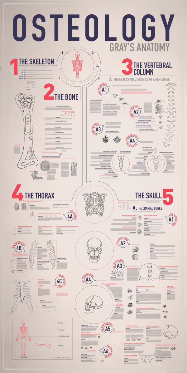 OSTEOLOGY // Infograph by Emmy de Leon, via Behance