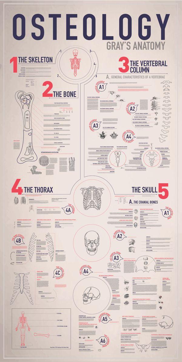 infographics, design, graphic,