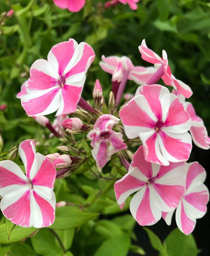 tolles winterfeste gartenblumen die die kalte gut uberstehen am pic und fcceeaffeacaeacafb