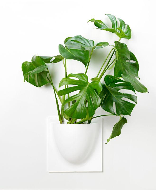 Vertiplans - vægkrukke - dansk design - interiør - botanik - interiør - planter - dekoration - boligindretning - indretning - nordiske riger - nordisk design - skandinavisk design
