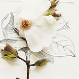 click thumbnails for larger picsWith spring in full effect and everything around us blooming, we were inspired by Kari Herer's photographs. She takes some beautiful pictures of flowers and animals. Her latest set of magnolia blossoms and flower illustrations is stunning.