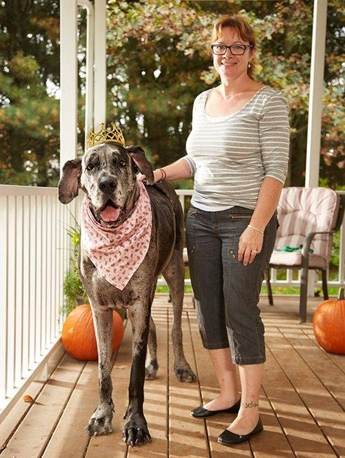 Morgan Tallest Female Dog in the World